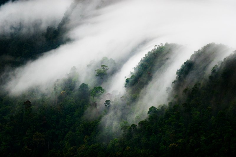 Rainforrest by Mattias A Klum